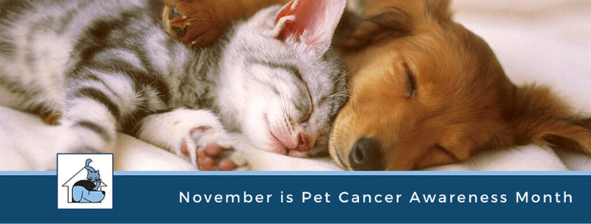 Top 10 Warning Signs of Pet Cancer