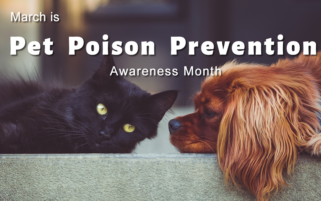 Know the Signs of Poisoning in Dogs & Cats